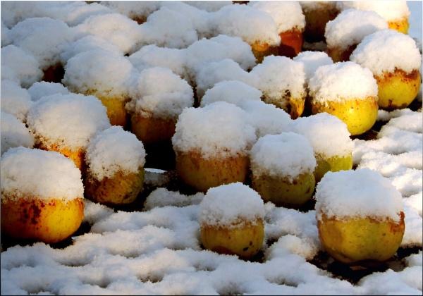 Apples in white hats by helenlinda