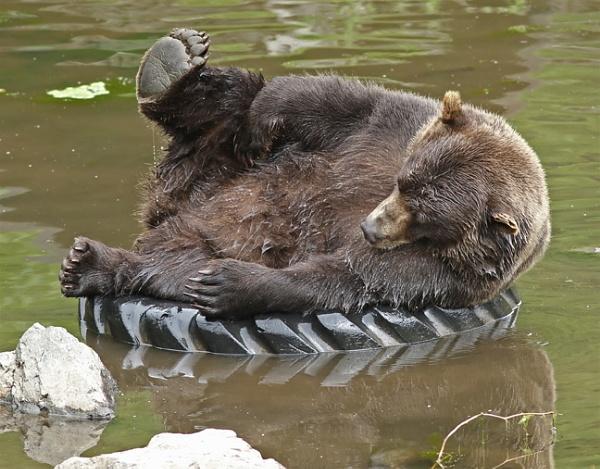 Bear Fun by hmk