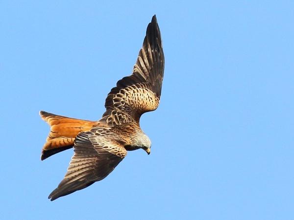 Kite Flight... by TerryMcK