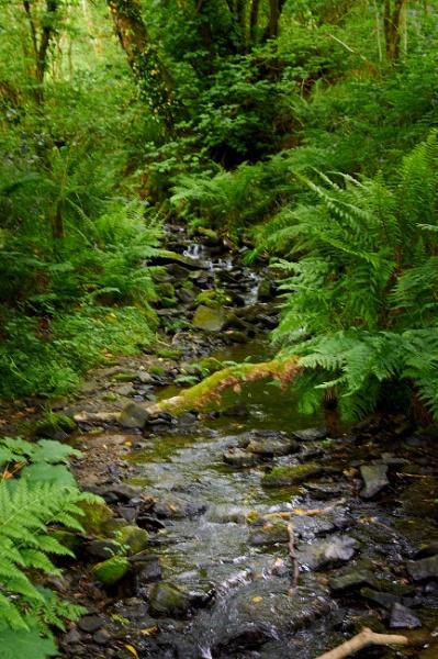 West Wales Stream by Meditator