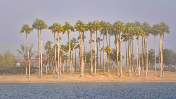 Palm Haven by blackbird3