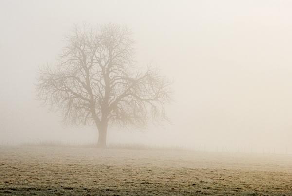 Tree in the Mist by Irishkate