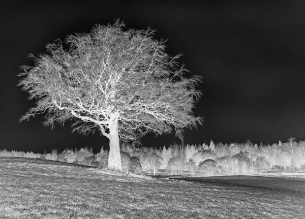 Winter Tree by Irishkate