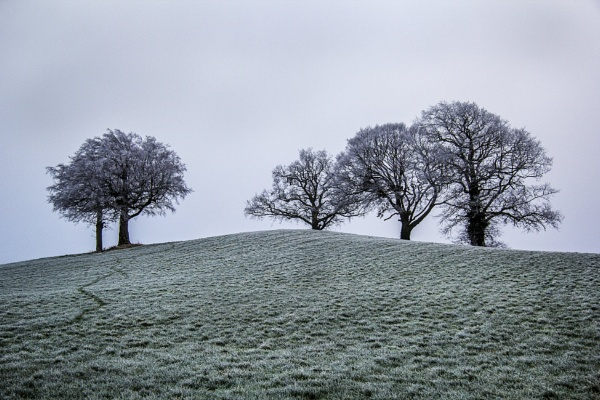 Copse on the Hill by Irishkate