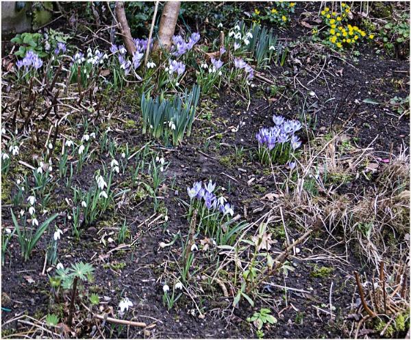 Spring  colour in the garden by derekp