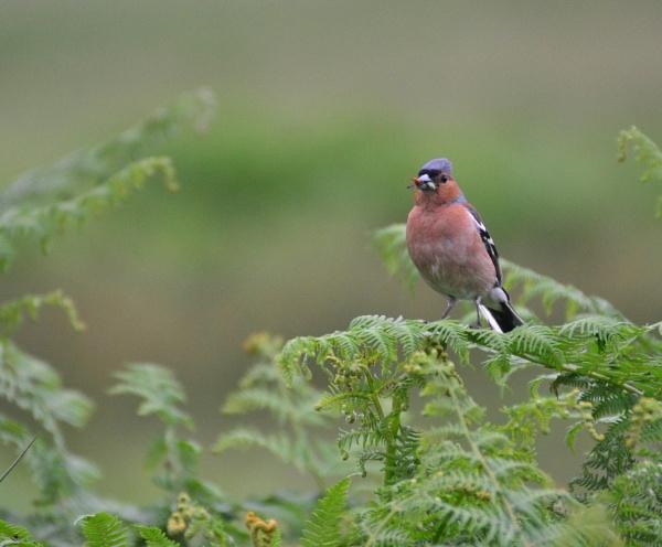 Finch by dhandjh