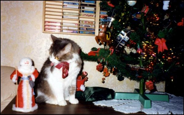 not a fan of Santa! by laura1