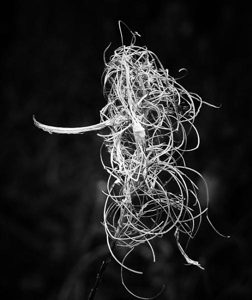 Tendrils by dudler