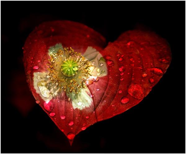 Valentine by capto