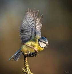 Blue In Flight