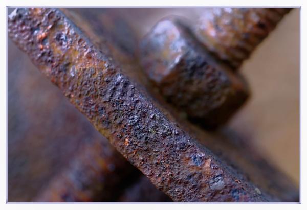 Rustic tones by Shedboy