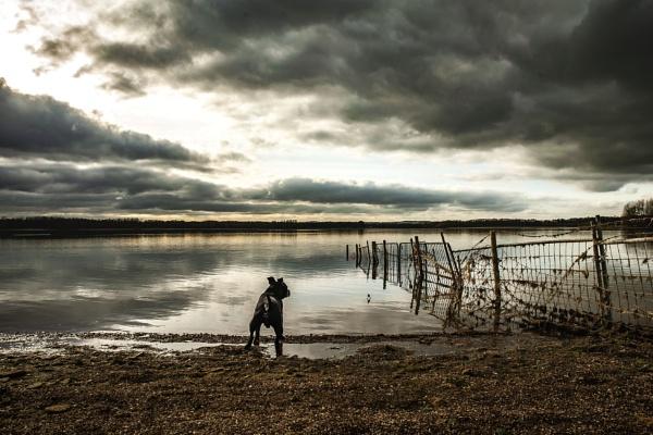 Dog walk at Rutland Water by feen96