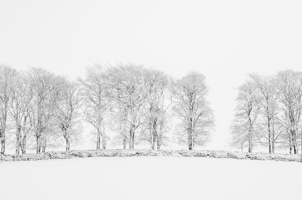 Ribblehead Trees. by Skyerocket
