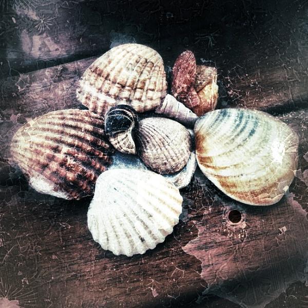 Shells by Monochrome2004