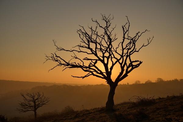 Tree by alfpics