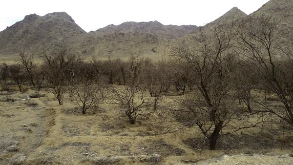 Dry trees by nkargar1356