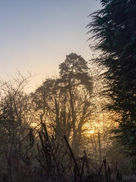 Penn Sunrise by TreefrogPhotography