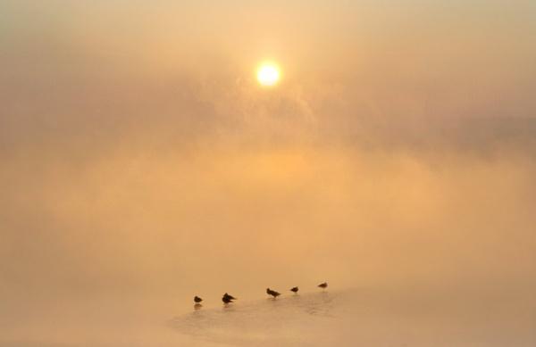 Dawn Isolations