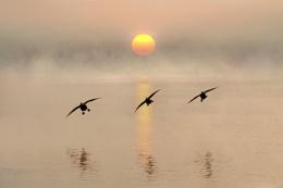 Dawn landing