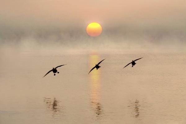 Dawn landing by adriansart