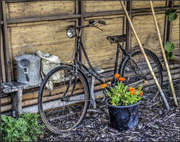 Ladies Bike by jcolind