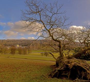 Fallen Tree At chatsworth