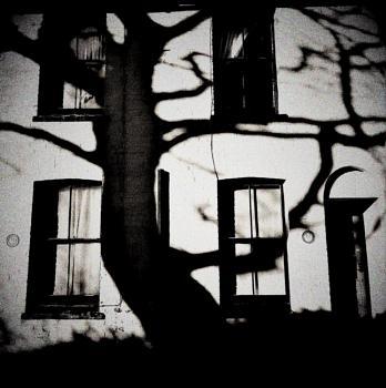 Creepy Shadow Tree in mono