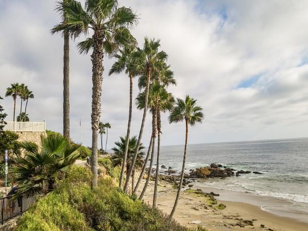 Beach Palms by blackbird3