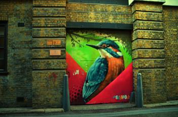 Bird watching on the wall !!