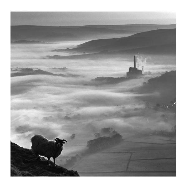 On the edge .. by woodlark