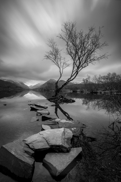 Lone Birch by tolle13