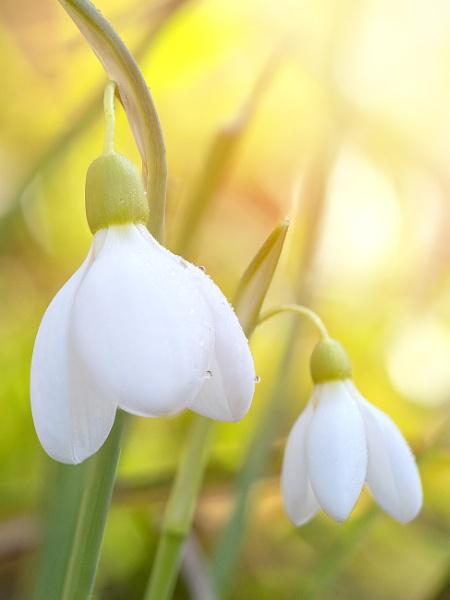 Springtime by tutye