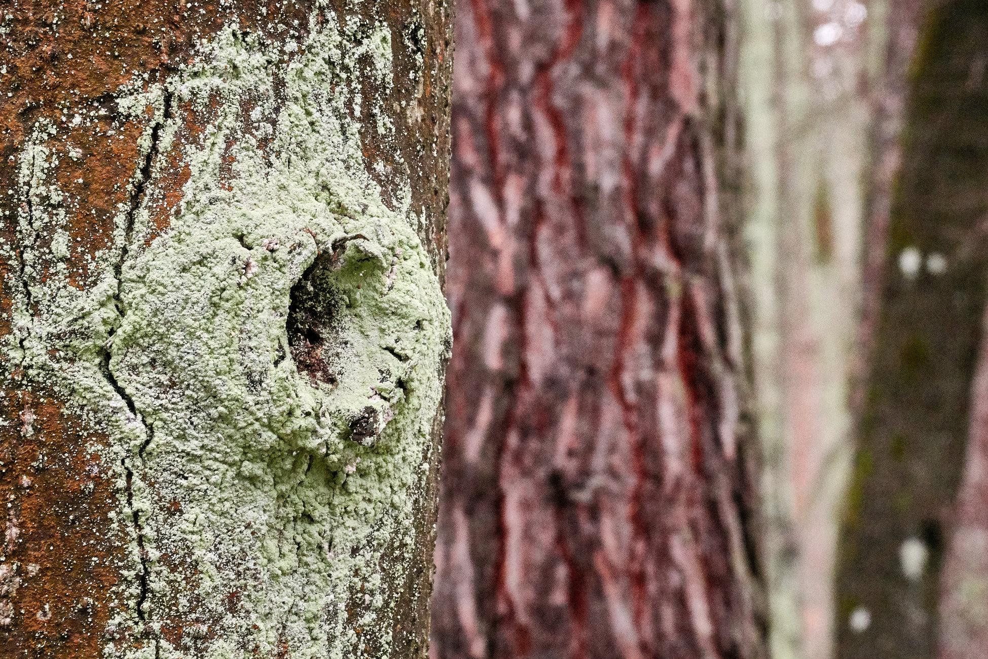 On the tree bark