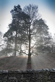 Devine Tree