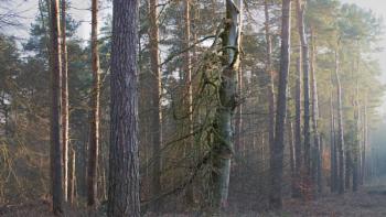 Dominant Trees