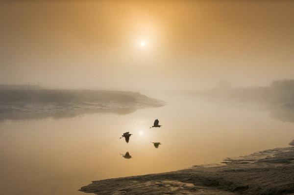 Flight of the Herons by adriansart