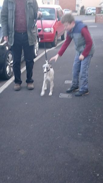 New puppy by SomersetFiddler