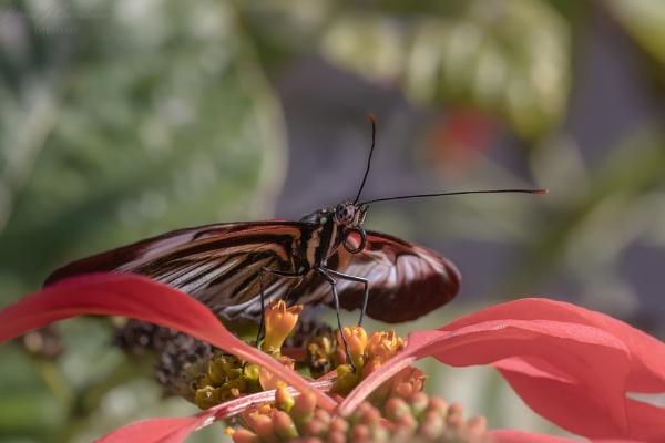 Piano Key Butterfly by DBoardman