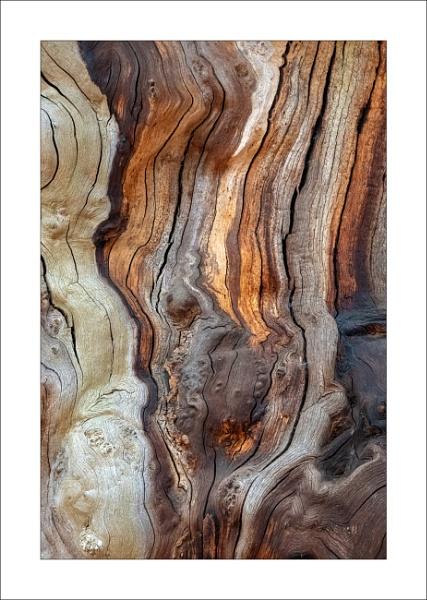 Sherwood Oak - ii by Steve-T