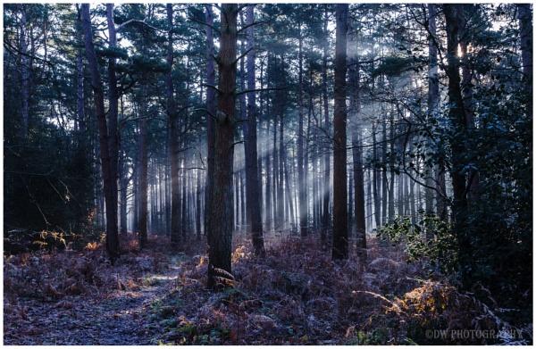 Rays of Norfolk light by Dwaller