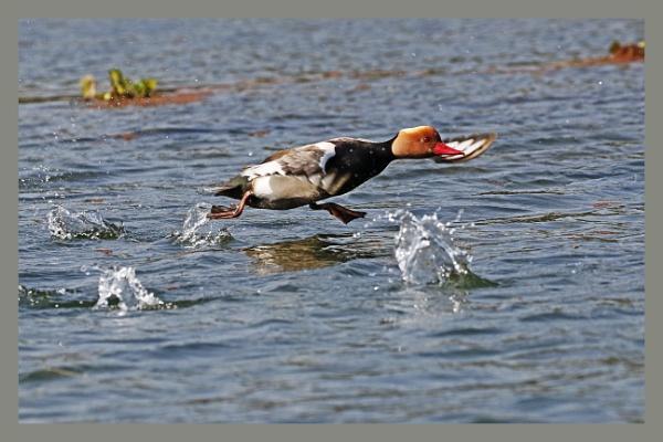 Take off by prabhusinha