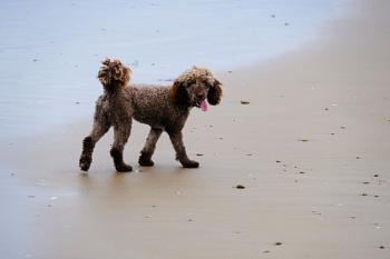 Milo at Basham Beach