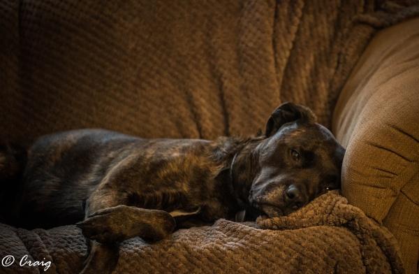 Snuggle by Craig75