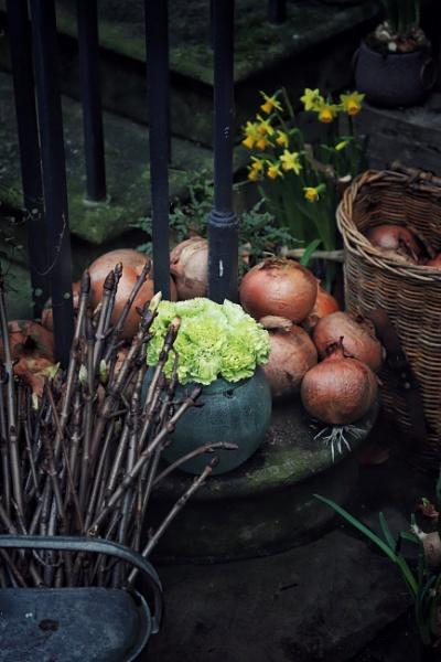 Onions by Merlin_k