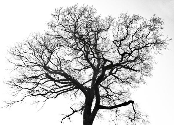 Tree Tracery by nclark