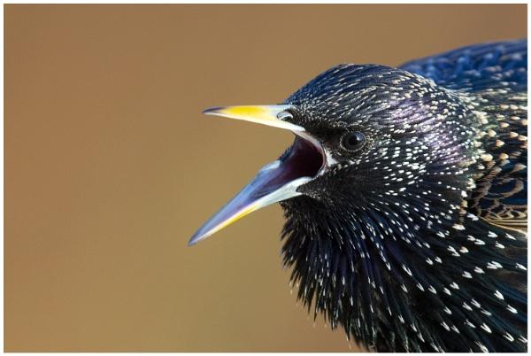 Angry Bird! by NigelKiteley