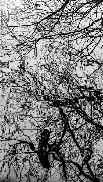 Twisted Twigs by RLF