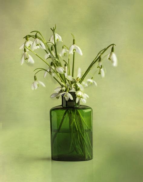 Snowdrops in Green Bottle by Irishkate