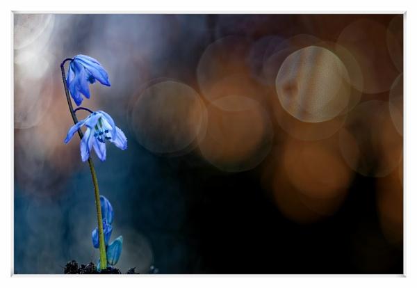 Quietly blue by Shedboy