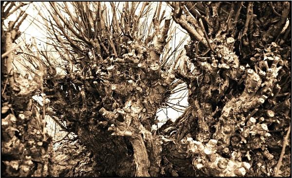wicker-willow by FabioKeiner